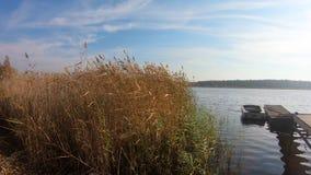 Άποψη σχετικά με spikly τη χλόη, ξύλινη αποβάθρα, βάρκα στην μπλε έννοια ποταμών, ηρεμίας και χαλάρωσης απόθεμα βίντεο