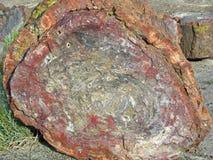 Άποψη τελών ενός πετρώνω? κούτσουρου Στοκ εικόνες με δικαίωμα ελεύθερης χρήσης