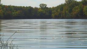 Άποψη της ήρεμης επιφάνειας του νερού λιμνών φιλμ μικρού μήκους
