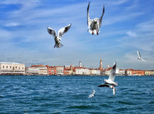 Άποψη της Βενετίας - γλάροι στοκ εικόνα με δικαίωμα ελεύθερης χρήσης