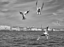 Άποψη της Βενετίας - γλάροι Στοκ Φωτογραφία