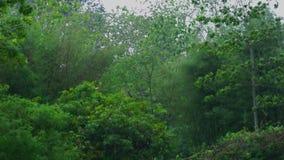 Άποψη της βροχής και ο αέρας στο δάσος της Ταϊλάνδης φιλμ μικρού μήκους