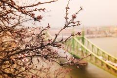 άποψη της γέφυρας ελευθερίας Στοκ Φωτογραφίες