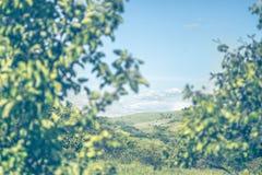 Άποψη της γούρνας λόφων τα δέντρα Στοκ Εικόνα