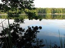 Άποψη της δασικής λίμνης από Στοκ Φωτογραφία
