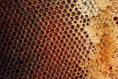 Άποψη της κηρήθρας με το γλυκό μέλι Στοκ Φωτογραφία