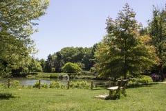 Άποψη της λίμνης στο δασικό κάθισμα κάτω από το δέντρο Ο πρώτος χρόνος άνοιξη λήφθηκε στοκ φωτογραφίες με δικαίωμα ελεύθερης χρήσης