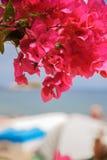 Άποψη της Νίκαιας στο νησί από την παραλία σε όλα τα κόκκινα λουλούδια του bougainvillea Στοκ Φωτογραφία