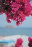 Άποψη της Νίκαιας στο νησί από την παραλία σε όλα τα πορφυρά λουλούδια του bougainvillea Στοκ Εικόνες
