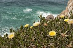 Άποψη της Νίκαιας του ακρωτηρίου Roca, Πορτογαλία Στοκ φωτογραφίες με δικαίωμα ελεύθερης χρήσης
