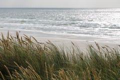 Άποψη της παραλίας από τους αμμόλοφους με τη χλόη αμμόλοφων Στοκ Εικόνες