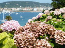 Άποψη της πόλης παραλιών και των ανθίζοντας φυτών Στοκ φωτογραφία με δικαίωμα ελεύθερης χρήσης