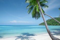 Άποψη της συμπαθητικής τροπικής παραλίας με τους φοίνικες Στοκ Εικόνα