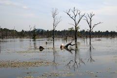 Άποψη της τάφρου με τα νεκρά δέντρα γύρω από το ναό Preah Neak Poan Στοκ εικόνες με δικαίωμα ελεύθερης χρήσης