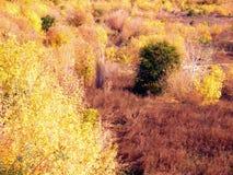 Άποψη της φύσης φθινοπώρου από ένα ύψος ΙΙ στοκ εικόνες
