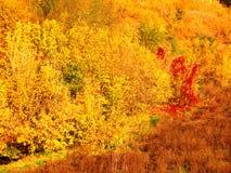 Άποψη της φύσης φθινοπώρου από ένα ύψος στοκ φωτογραφία