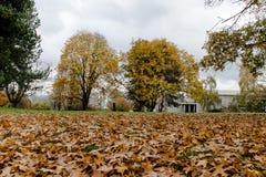Άποψη της χειμερινής σκηνής στο πάρκο του Stanley στοκ φωτογραφίες με δικαίωμα ελεύθερης χρήσης