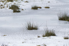 Χλόη και χιόνι Στοκ φωτογραφίες με δικαίωμα ελεύθερης χρήσης