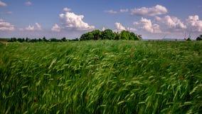 Άποψη τοπίων ενός πράσινου τομέα γεωργίας με το μπλε ουρανό και τα άσπρα σύννεφα Στοκ φωτογραφία με δικαίωμα ελεύθερης χρήσης