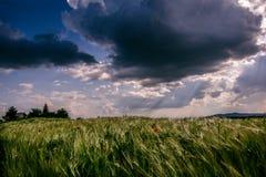 Άποψη τοπίων ενός πράσινου τομέα γεωργίας με το μπλε ουρανό και τα άσπρα σύννεφα Στοκ εικόνα με δικαίωμα ελεύθερης χρήσης