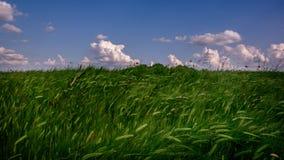 Άποψη τοπίων ενός πράσινου τομέα γεωργίας με το μπλε ουρανό και τα άσπρα σύννεφα Στοκ Εικόνες
