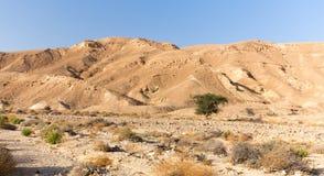 Άποψη τοπίων κοιλάδων δέντρων βουνών ερήμων, φύση του Ισραήλ Στοκ φωτογραφία με δικαίωμα ελεύθερης χρήσης