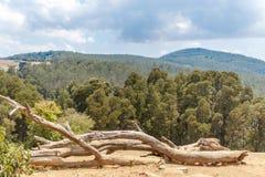 Άποψη τοπίων με τη χλόη, δέντρα, εγκαταστάσεις, ξύλινο δέντρο περικοπών, βουνό, σκοτεινός ουρανός, Ooty, Ινδία, στις 19 Αυγούστου Στοκ Εικόνες