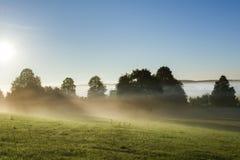 Άποψη τοπίων πρωινού πέρα από το ομιχλώδες λιβάδι στην Πολωνία Στοκ Εικόνες