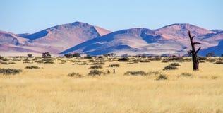 Άποψη τοπίων στο τηγάνι Sossusvlei στη Ναμίμπια r στοκ φωτογραφίες