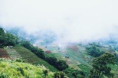 άποψη τοπίων στο monjam Chaingmai Ταϊλάνδη στοκ φωτογραφία