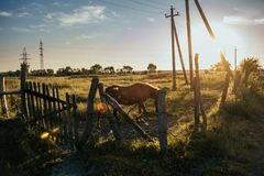 Άποψη τοπίων σχετικά με τον τομέα με το άλογο στοκ φωτογραφίες με δικαίωμα ελεύθερης χρήσης