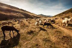 Άποψη τοπίων του βουνού Bistra Στοκ εικόνες με δικαίωμα ελεύθερης χρήσης