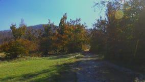 Άποψη τοπίων του ζωηρόχρωμου δασικού αέρα φθινοπώρου που φυσά μέσω των φύλλων Μη λιθοστρωμένος τοπικός δρόμος που οδηγεί στο δάσο φιλμ μικρού μήκους