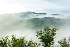 Άποψη του δάσους στην υδρονέφωση πρωινού Στοκ Εικόνες