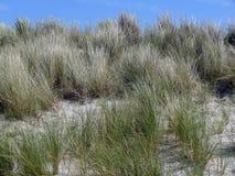 Άποψη του αμμόλοφου με τη χλόη τιμονιών Στοκ Φωτογραφία