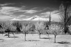 Άποψη του βουνού Ararat που βλέπει από Jerevan Αρμενία Στοκ Εικόνα