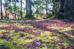 Άποψη του βρύου στο μεγάλο δέντρο ρίζας Στοκ εικόνες με δικαίωμα ελεύθερης χρήσης