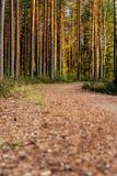 Άποψη του δασικού δρόμου, τίτλος βαθύτερος στα ξύλα στοκ φωτογραφία