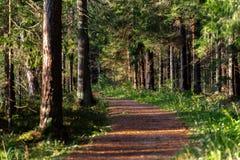 Άποψη του δασικού δρόμου, τίτλος βαθύτερος στα ξύλα στοκ φωτογραφία με δικαίωμα ελεύθερης χρήσης