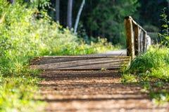 Άποψη του δασικού δρόμου, τίτλος βαθύτερος στα ξύλα στοκ εικόνες με δικαίωμα ελεύθερης χρήσης