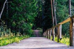 Άποψη του δασικού δρόμου, τίτλος βαθύτερος στα ξύλα στοκ εικόνα