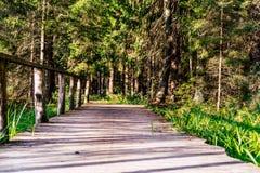 Άποψη του δασικού δρόμου, τίτλος βαθύτερος στα ξύλα στοκ φωτογραφίες