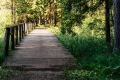 Άποψη του δασικού δρόμου, τίτλος βαθύτερος στα ξύλα στοκ εικόνα με δικαίωμα ελεύθερης χρήσης