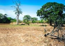 Άποψη του εθνικού πάρκου Yala, πάρκο ζωής της Σρι Λάνκα διασημότερο άγριο στοκ εικόνα