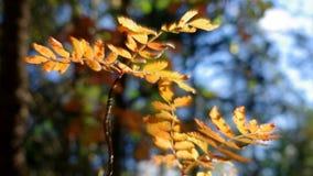 Άποψη του ευρωπαϊκού δάσους φθινοπώρου απόθεμα βίντεο