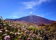 Άποψη του ηφαιστείου EL Teide με τα όμορφα λουλούδια βουνών στο πρώτο πλάνο Τοποθετήστε Teide την άνοιξη Στοκ Εικόνες
