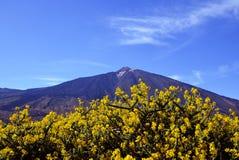 Άποψη του ηφαιστείου EL Teide με τα όμορφα λουλούδια βουνών στο πρώτο πλάνο Τοποθετήστε Teide την άνοιξη Στοκ Φωτογραφία