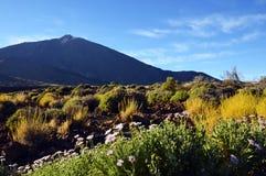 Άποψη του ηφαιστείου EL Teide με τα όμορφα λουλούδια βουνών στο πρώτο πλάνο Pico del Teide την άνοιξη Στοκ Φωτογραφία