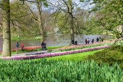 Άποψη του κήπου λουλουδιών Keukenhof στοκ εικόνες