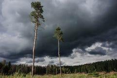 Άποψη του καθαρισμένου δάσους μια νεφελώδη ημέρα Στοκ Φωτογραφίες